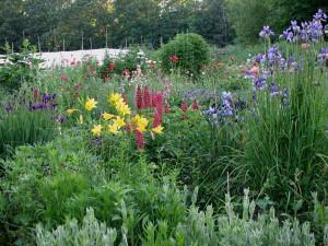 Fire Flower Garden