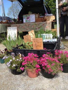 Fire Flower Garden Plants at Market